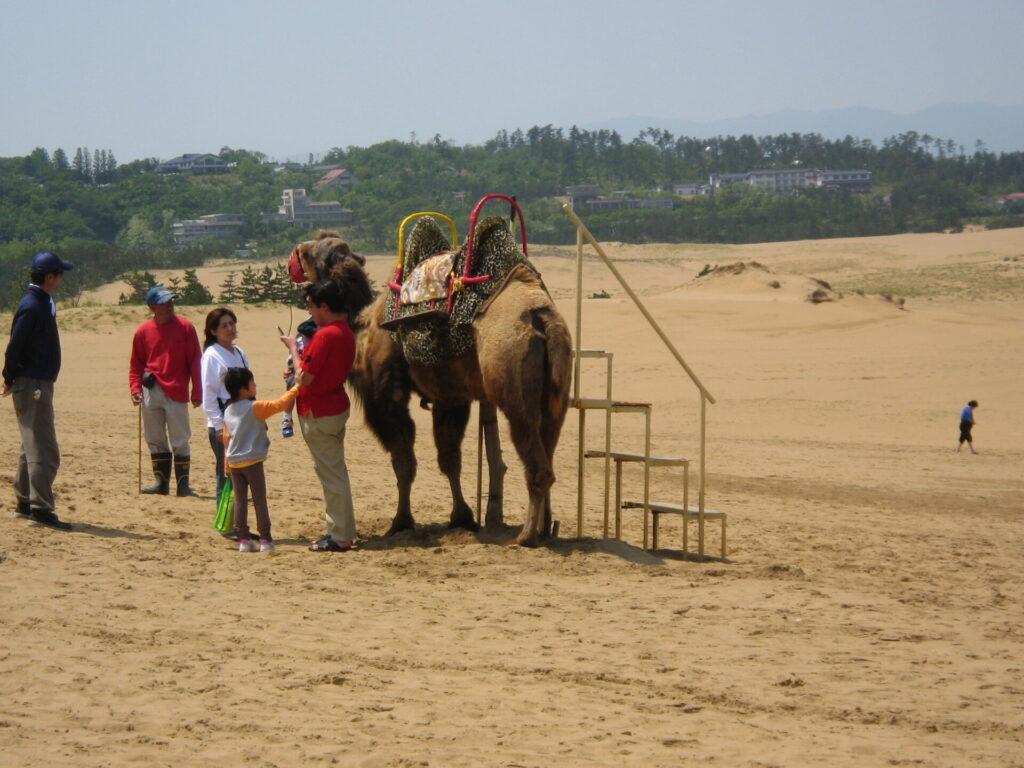 Camel at Tottori Sand Dunes